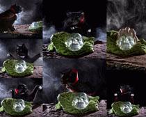 黑猫与水晶摄影时时彩娱乐网站