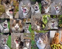 顽皮的猫咪摄影时时彩娱乐网站