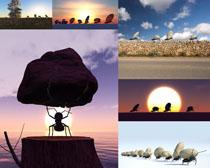 勤劳的蚂蚁摄影时时彩娱乐网站