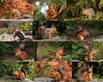 可爱松鼠动物拍摄时时彩娱乐网站