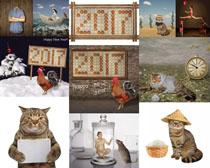 创意动物摄影高清图片