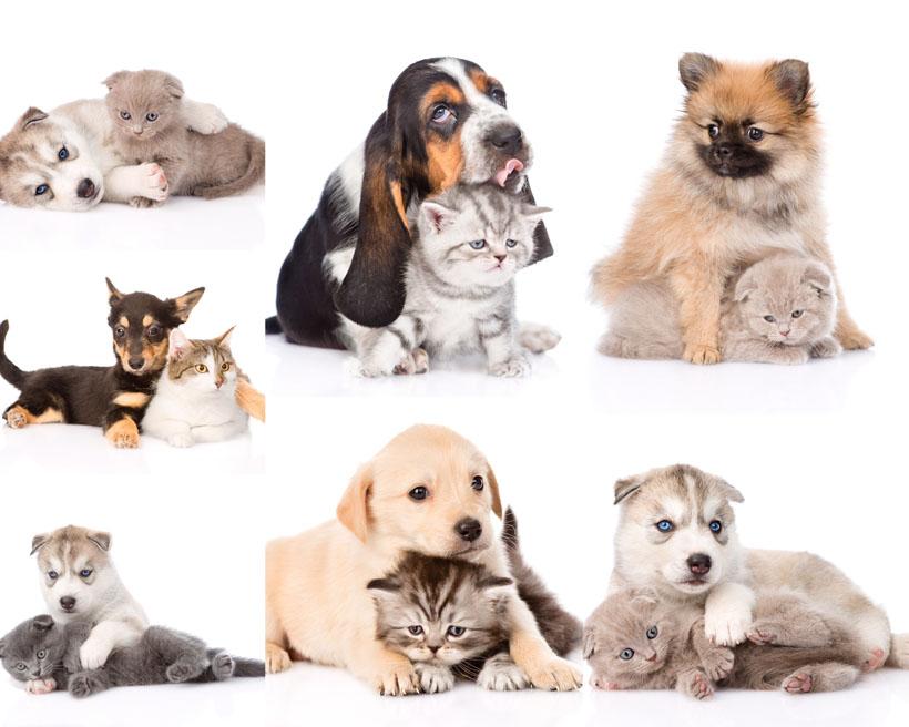 可爱小狗小猫摄影高清图片