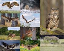 猫头鹰动物摄影时时彩娱乐网站