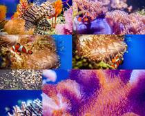 海底植物摄影高清图片