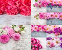 美丽的玫瑰花朵展示高清图片