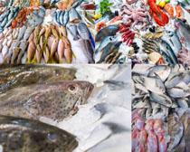 冰冻海鱼摄影高清图片