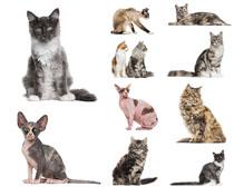 各种可爱猫咪摄影时时彩娱乐网站