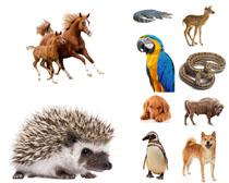 飞鸟与陆地动物摄影高清图片