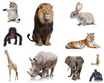 森林陆地动物摄影时时彩娱乐网站