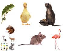 小动物摄影高清图片
