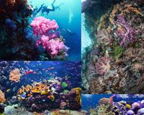 海底世界风光摄影高清图片