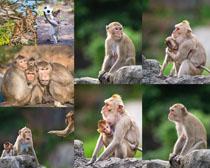 动物猴子摄影高清图片