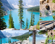 树木湖水景观摄影高清图片