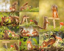 蘑菇与小松鼠摄影时时彩娱乐网站