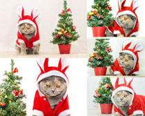 圣诞树猫咪摄影高清图片