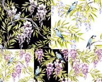 植物鳥類繪畫攝影高清圖片