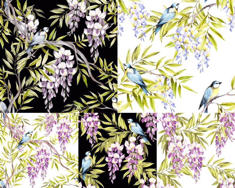 植物鸟类绘画摄影时时彩娱乐网站