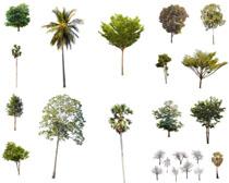植物树木摄影高清图片