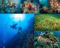 海底世界风光拍摄高清图片