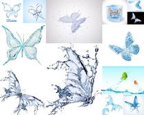 水效蝴蝶摄影高清图片
