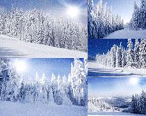 树林雪景摄影高清图片