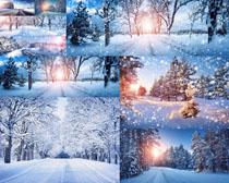 美丽的树木雪景摄影高清图片