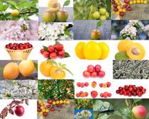 杨桃樱桃水果摄影高清图片