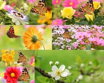 色彩花朵与蝴蝶摄影高清图片