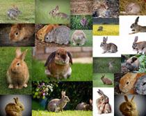 草地小兔子拍摄高清图片