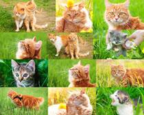 聪明的猫咪拍摄高清图片