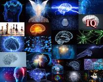 3D大脑科技摄影高清图片