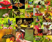 美丽的蝴蝶拍摄高清图片