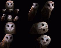 神奇的猫头鹰摄影时时彩娱乐网站