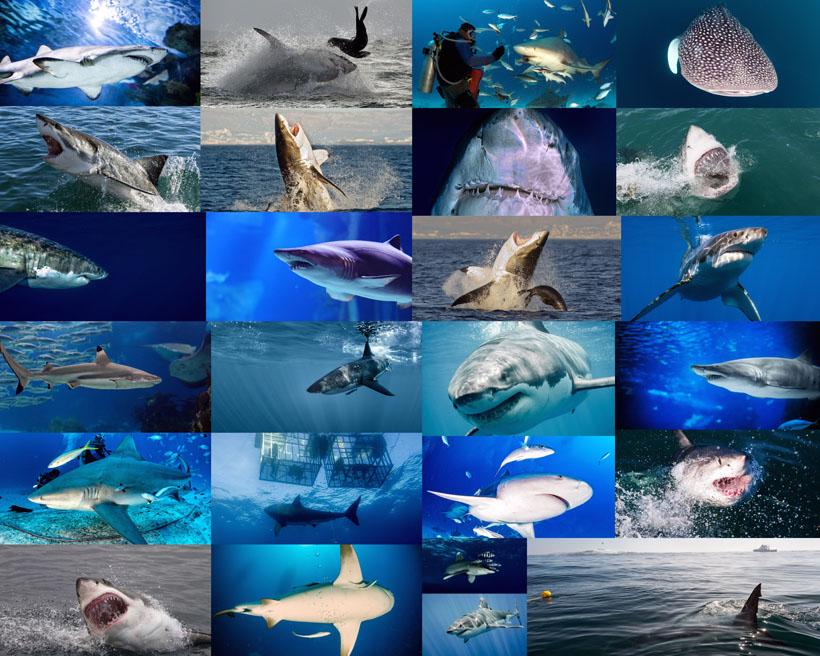 海底鲨鱼拍摄时时彩娱乐网站