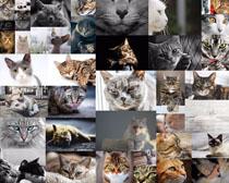 小猫咪拍摄高清图片