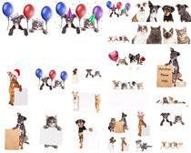 广告牌气球狗狗摄影高清图片