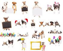可爱展示狗拍摄高清图片