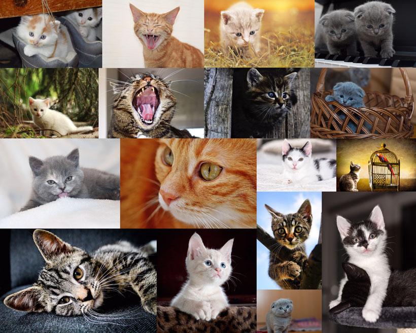 可爱的猫咪拍摄高清图片