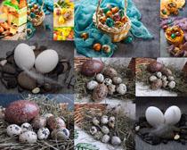 花纹艺术彩蛋拍摄高清图片