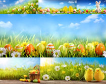 草地花朵彩蛋拍摄高清图片