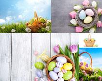 花纹彩蛋花朵拍摄高清图片