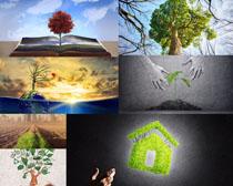 爱护环保树林拍摄高清图片