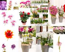 美丽的盆栽花朵摄影高清图片