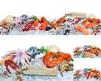 冰冻海鲜食材摄影高清图片