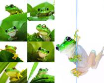 可爱的青蛙拍摄高清图片