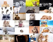 可爱的小猫动物拍摄高清图片