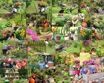 园林花草拍摄高清图片