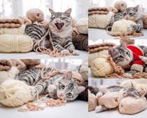 毛线与猫咪摄影高清图片