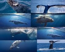 海底鲸鱼摄影高清图片