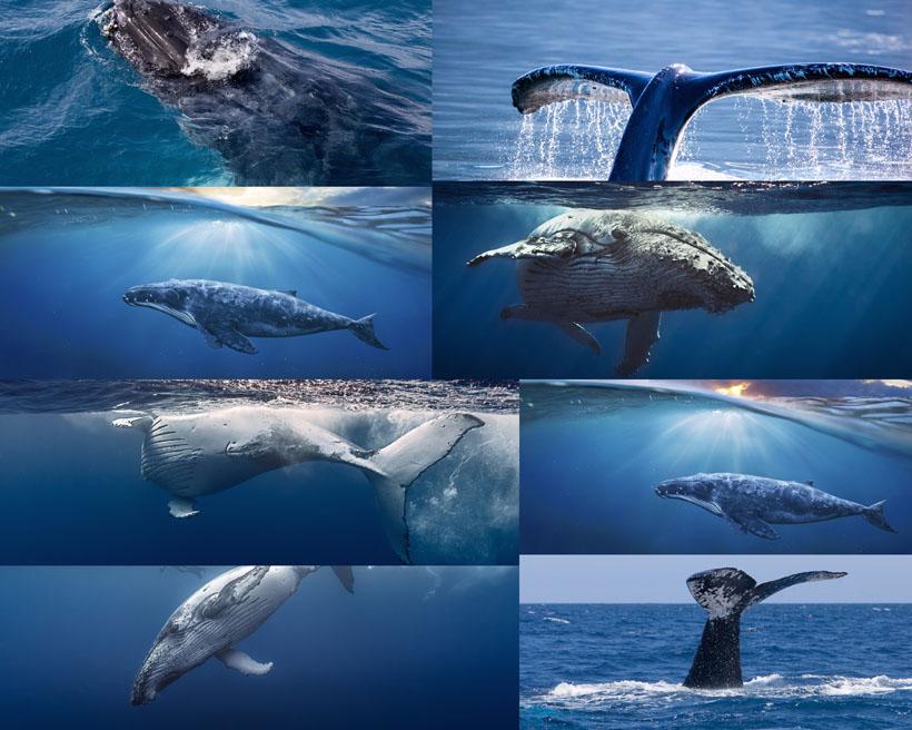 海底鲸鱼摄影时时彩娱乐网站